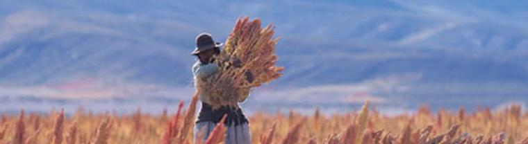 Peru itemLeading exporter of Quinoa to Europe